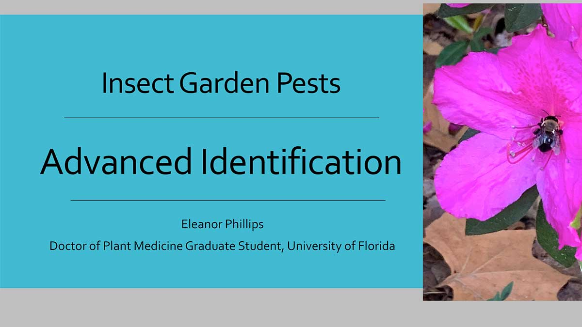Advanced Insect Identification and Control Recommendations Presentation Cover